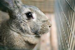 Grey rabbit close-up Stock Image