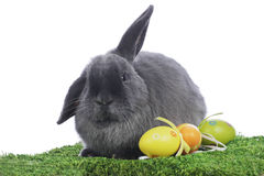 Grey rabbit in easter decoration Stock Photos