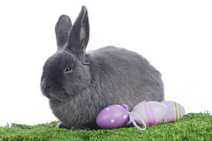 Grey rabbit in easter decoration Stock Photography