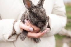 Grey rabbit in girls hands outdoor stock image