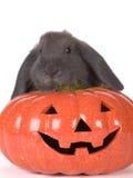Grey rabbit and a pumpkin Royalty Free Stock Photography