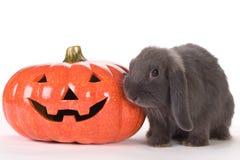 Grey rabbit and a pumpkin Royalty Free Stock Image