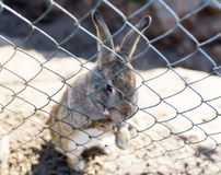 Grey rabbit sitting in a cage Stock Images