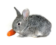Grey rabbit on white background. Grey rabbit  on white background Royalty Free Stock Photos