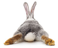 Grey rabbit. Grey rabbit on a white background Royalty Free Stock Photography