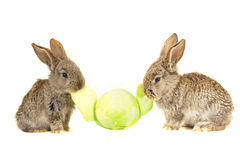 Grey rabbits Royalty Free Stock Photo