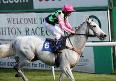 Grey Racehorse. BRIGHTON RACECOURSE - SEPTEMBER 29: Racehorse Summer Recluse finishing third place and ridden by Jockey T. Quinn Royalty Free Stock Image