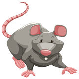 Grey rat. With long tail Stock Photography