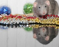 Grey rat. New year 2020. Symbol of the year of the rat. Christmas decorations. Happy new year congratulations. The concept of the. Year of the rat on the Chinese stock photo