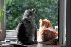 Grey and red cats on window. Big grey and red cats on window at sunny day Stock Photo