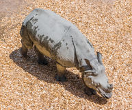 Grey Rhino på zoo Royaltyfri Foto