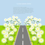 Grey road with white daisies on the green roadside, blue sky, background, vector Royalty Free Stock Images