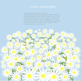 Grey road with white daisies on the green roadside, blue sky, background, vector Stock Image