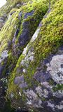 Grey Rock Covered with Green Moss Royalty Free Stock Photography
