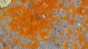 Grey rock stone with mostly orange lichens, closeup texture background, selective focus, shallow DOF.  stock photography