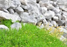 Grey rocks and green grass for the background. A scene in the mountains. Focus on the foreground stock photo