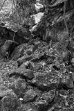 Grey rocks mountain dry foliage black white Stock Images