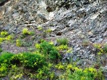 Grey rocky slope Stock Photography
