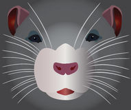 Grey rodent. Image shallow related to to by the mammal of rodent of his snout stock illustration