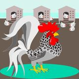 Grey rooster in the pen Stock Photography