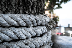 Grey Rope Tied Around Tree Trunk Royalty Free Stock Photography