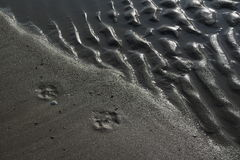 Grey sand pattern. Near the sea Royalty Free Stock Images