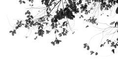 Grey scale leafs Royalty Free Stock Images