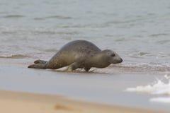 Grey Sea sur la plage Photo stock