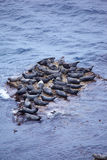 Grey Seal rookery Stock Photo