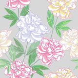 Grey Seamless pattern  with peonies Stock Photos