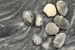 Grey Seashells on Grey Sand Royalty Free Stock Photography