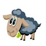 Grey sheep Stock Photo
