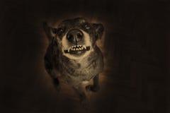 Grey shepherd grins Stock Photo