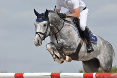 Grey show jumper Stock Photography