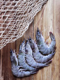 Grey shrimps Stock Images