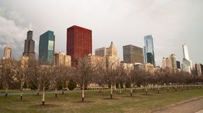 Downtown Chicago Illinois Skyline Stark Winter Park Trees. Grey skies cover tall buildings along Lake Shore Drive in Chicago Illinois Royalty Free Stock Images