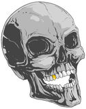 Grey skull Stock Images