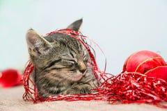 Grey small Christmas kitten sleeping Stock Photo