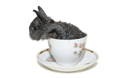 Grey small rabbit in the white cup Stock Photos