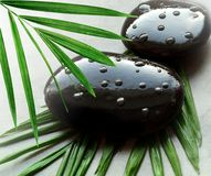 Grey spa background, palm leaves and black wet stones, top view Stock Photography