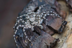 Grey spider on tree bark Stock Photos