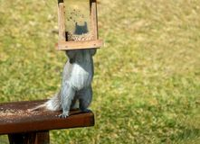 Grey squirrel steals bird seed. Smart silly grey squirrel stands on a table to steal birdseed from a bird feeder with green background royalty free stock image
