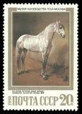 Grey Stallion av den Orlov travareaveln arkivfoto