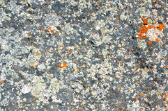 Grey stone Stock Photography