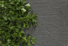 Grey stone background with fresh parsley Royalty Free Stock Photography
