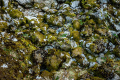 Grey stone with green moss Stock Photography