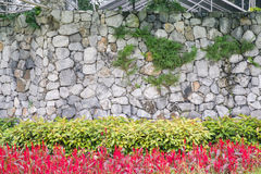Grey stone wall with plant and flower Royalty Free Stock Images