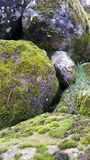 Grey Stones Covered with Green Moss Stock Photography
