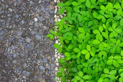 Grey stones path and bed of green plants. stock images