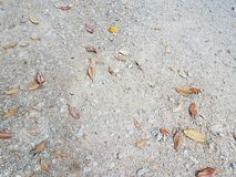 Grey stones or rocks on ground with fallen leaves royalty free stock photos